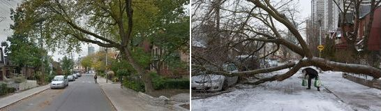 Toronto Ice Storm 2013-2014. Poor Tree and Car.